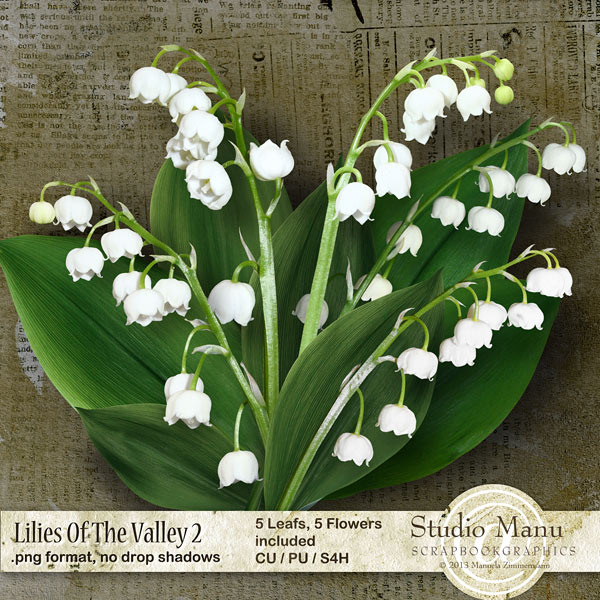 CU Lilies Of The Valley